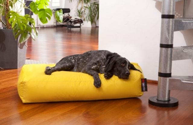 """Für Hunde gemacht: Das Kissen """"Dogbed"""" ist bequem und pflegeleicht."""