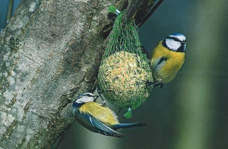 Tier Infos & Tier News @ Tier-News-247.de | Vögel müssen richtig gefüttert werden