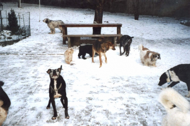 Tier Infos & Tier News @ Tier-News-247.de | Hunde lieben Schnee, doch sollten Hundehalter vorsichtig sein