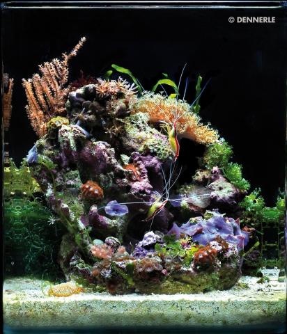 Tier Infos & Tier News @ Tier-News-247.de | Meerwasser-Aquarium - so schön kann es aussehen