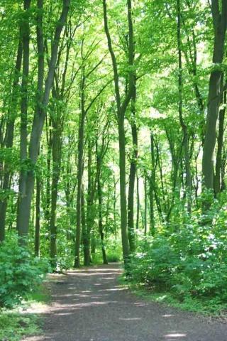 Berlin-News.NET - Berlin Infos & Berlin Tipps | Feste Biomasse trägt mit mehr als 70 Prozent zur Wärmeerzeugung durch erneuerbare Energien bei