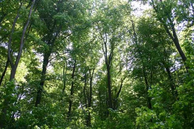 Technik-247.de - Technik Infos & Technik Tipps | Energie-Reservoir mit Klimaschutz-Funktion: der deutsche Wald – Holz trägt als Brennstoff zur Energiewende bei