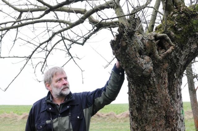 Pflanzen Tipps & Pflanzen Infos @ Pflanzen-Info-Portal.de | Vogelschützer Detlef Regulski inspiziert natürliche Bruthöhle des Steinkauz