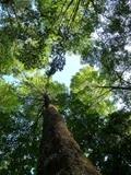 Landwirtschaft News & Agrarwirtschaft News @ Agrar-Center.de | Der Stifterwald ermöglicht jeden, sich einfach und direkt an der Tropenwald-Aufforstung zu beteiligen