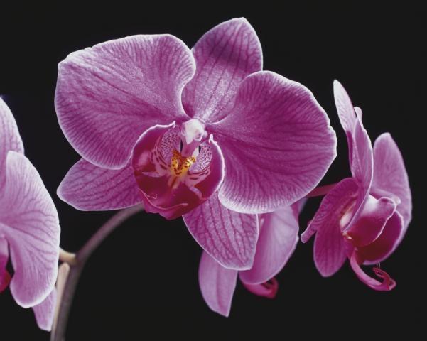 Weihnachten-247.Info - Weihnachten Infos & Weihnachten Tipps | Orchideen sind als Mini-Pflanze sehr beliebt
