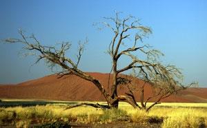 Pflanzen Tipps & Pflanzen Infos @ Pflanzen-Info-Portal.de | Printzipia unterstützt Klimaschutz in Togo