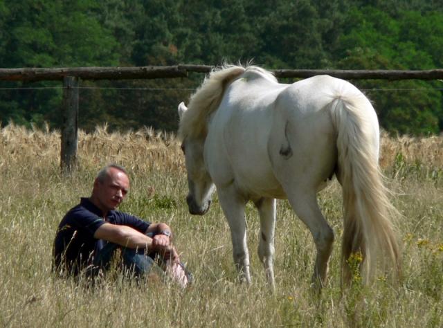 Tier Infos & Tier News @ Tier-News-247.de | Pferde als Ruhepol und Kraftquelle