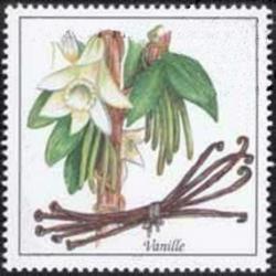 Orchideen-Seite.de - rund um die Orchidee ! | Foto: Im Online-Shop von Vanilla-Trade können Feinschmecker die ursprüngliche mexikanische Gourmet Vanilla direkt bestellen.