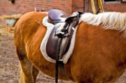 Landwirtschaft News & Agrarwirtschaft News @ Agrar-Center.de | Foto: Wie kann man sich vor Regressansprüchen beim Umgang mit dem Pferd schützen?
