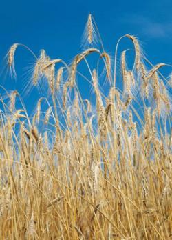 Landwirtschaft News & Agrarwirtschaft News @ Agrar-Center.de | Agrar-Center.de - Agrarwirtschaft & Landwirtschaft. Foto: YMC ist ein international führender Anbieter von Hochleistungsprodukten für die Flüssig-Chromatographie mit Standorten in Japan, China, USA, Indien und Europa. Das Produktangebot umfasst analytische Säulen und Zubehör, Bulkmaterial für die Prozess-Chromatographie auf Silica- und Hybridbasis, präparative Anlagen, Auftragssynthesen, Auftragstrennungen und Methodenentwicklung.