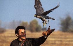 Landwirtschaft News & Agrarwirtschaft News @ Agrar-Center.de | Foto: Natur von ihrer nicht alltäglichen Seite : Ein Falkner >> wirft << seinen Jagdfalken zum Beuteflug. Auf der Fachmesse Jagen-Reiten-Fischen-Offroad stellt der Orden Deutscher Falkoniere die >> Jäger der Lüfte << vor.
