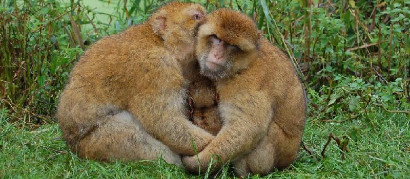 Geklonte Affen: Und dann? Eben - die Entwicklung in den vergangenen Jahren war stetig - dann sind die Menschen dran: Schöne neue, Angst machende Welt!