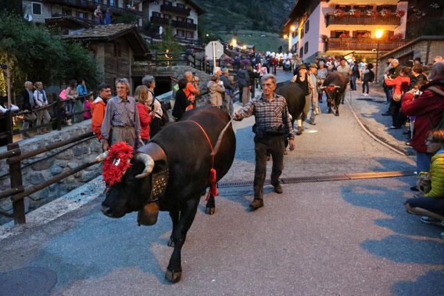 Italien-News.net - Italien Infos & Italien Tipps | Almabtrieb in Cogne - Aostatal © Enrico Romanzi