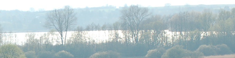 Buschwindr�schen, Schl�sselblumen und Nandus - Fr�hling im Biosph�renreservat Schaalsee!