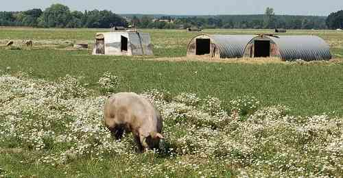 Landwirtschaft News & Agrarwirtschaft News @ Agrar-Center.de | Foto: Bioschweine Brandenburg (Goemnigk) 2015