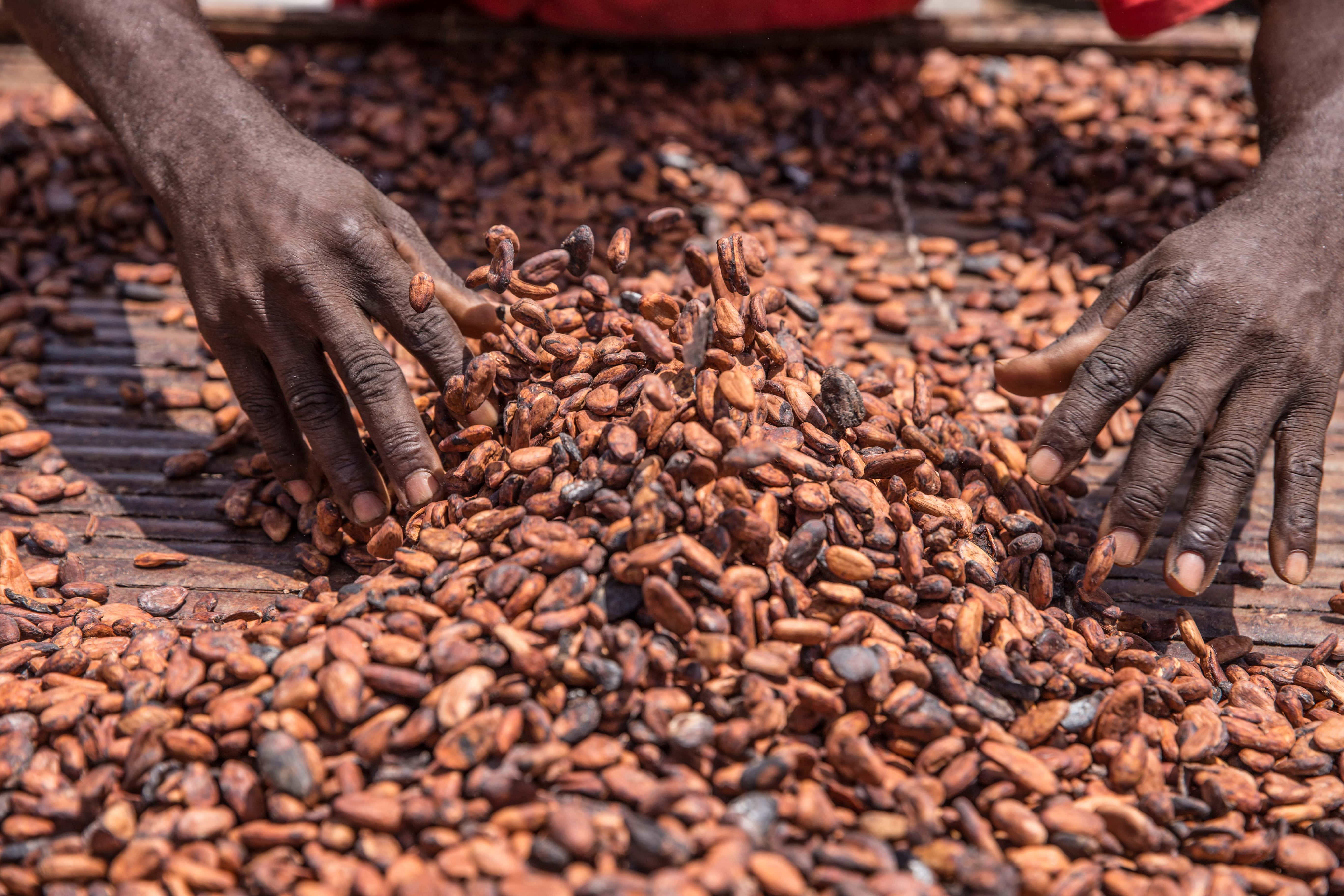 Deutsche-Politik-News.de | Cocoa farmer King Baudouin African Development Prize flickr.com