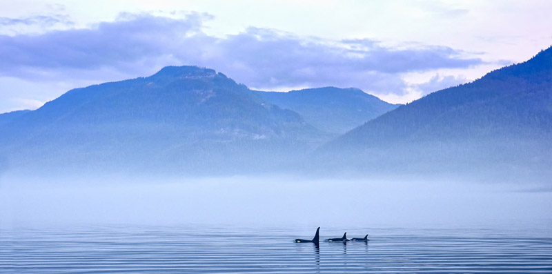 Aquaristik-Infos-247.de - Aquaristik Infos & Aquaristik Tipps |