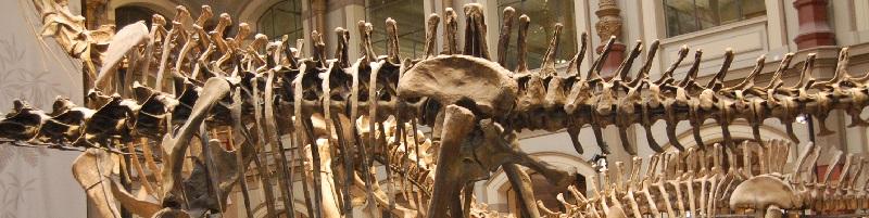 Deutsche-Politik-News.de | Dinosaurier-Skelet im Naturkundemuseum Berlin 2016