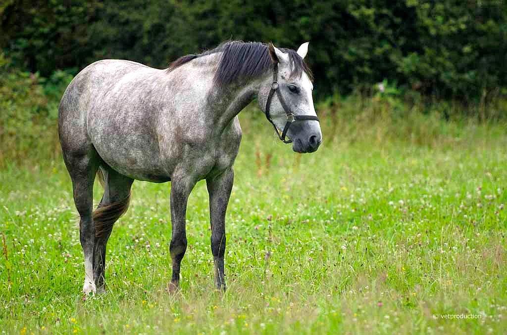 Sport-News-123.de | Bei Antritt des Wettkampfs darf keine verbotene Substanz im Körper des Pferdes vorhanden sein. Foto: vetproduction