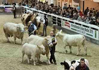 Landwirtschaft News & Agrarwirtschaft News @ Agrar-Center.de | Foto: Auf der Internationalen Grünen Woche Berlin 2019 (18.-27.1.) präsentiert die Tierhalle 25 die