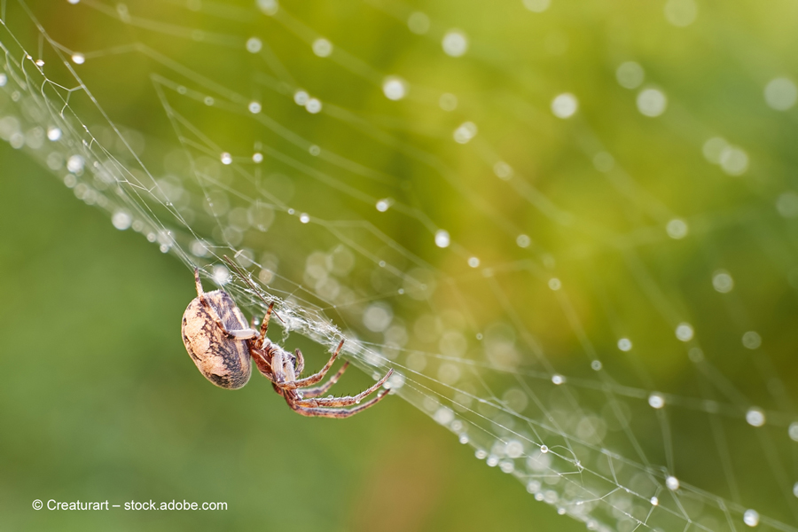 Auch bei Regen klebt die Beute der Spinne fest im Netz. Foto: Creaturart – stock.adobe.com   Freie-Pressemitteilungen.de