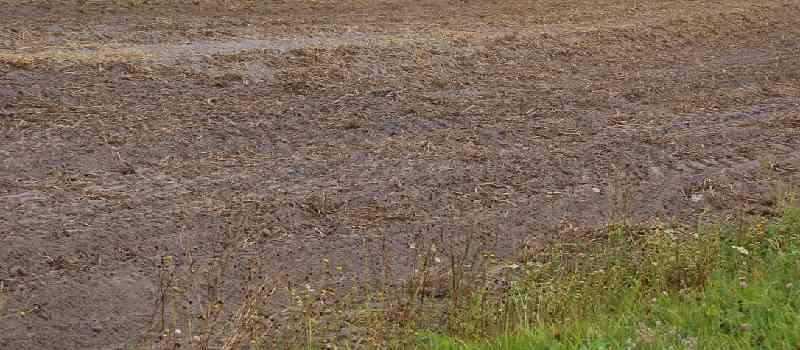 Deutsche-Politik-News.de | Kartoffelanbau Glyphosat Niedersachsen 2014