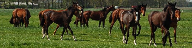 Deutsche-Politik-News.de | Pferde Niedersachsen 2012