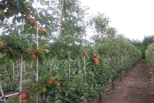 Kuba-News.de - Kuba Infos & Kuba Tipps | Oktober ist die perfekte Pflanzzeit für Obst- und Laubgehölze