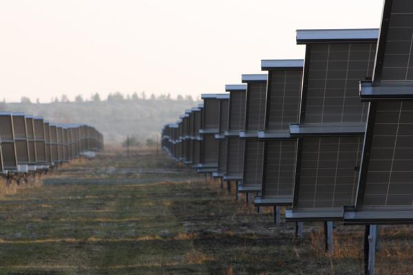 Pflanzen Tipps & Pflanzen Infos @ Pflanzen-Info-Portal.de | Beteiligung an modernen Solaranlagen: www.gruene-sachwerte.de/solarfonds