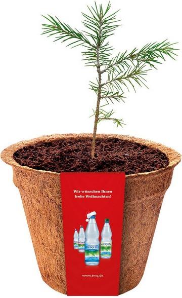 Nachhaltiges Weihnachtsgeschenk von Thüringer Waldquell
