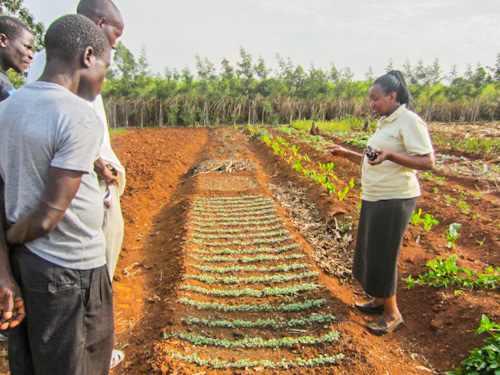 Landwirtschaft News & Agrarwirtschaft News @ Agrar-Center.de | Die laufende Spendenkampagne von Chido's Mushrooms ermöglicht weitere Trainings zum Thema ökologischer Anbau