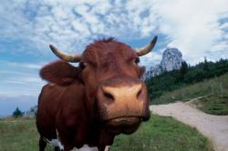 Landwirtschaft News & Agrarwirtschaft News @ Agrar-Center.de | Foto: Naturbewusster Urlaub in Prien am Chiemsee.