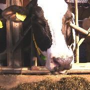 Landwirtschaft News & Agrarwirtschaft News @ Agrar-Center.de | Foto: Der Einsatz von pansenstabilen Fetten verbessert die Tiergesundheit und Milchleistung.