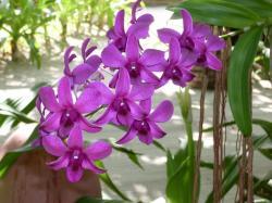 Orchideen-Seite.de - rund um die Orchidee ! | Foto: Orchideen gehören mit rund 35.000 Arten zu den größten Pflanzenfamilien. Außer in der Antarktis sind sie auf allen Kontinenten anzutreffen - von der arktischen Tundra, über gemäßigte Wälder und Grasland bis hin zu tropischem Regenwald.