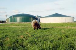 Landwirtschaft News & Agrarwirtschaft News @ Agrar-Center.de | Foto: Biogasanlagen: Hohe Methanausbeute durch agaSAAT Energiemais.