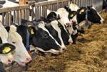 Landwirtschaft News & Agrarwirtschaft News @ Agrar-Center.de | Foto: Zulassungserweiterung für Langzeitantibiotikum gegen akute post-partale Metritis.