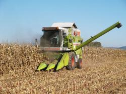 Landwirtschaft News & Agrarwirtschaft News @ Agrar-Center.de | Foto: Feldhäcksler bei der Maisernte (Foto: Proplanta).