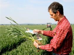 Landwirtschaft News & Agrarwirtschaft News @ Agrar-Center.de | Foto: Das Korn ist von der Aussaat bis zur Ernte einer ständigen strengen Kontrolle unterworfen. Info: www.gmf-info.de Foto: bonn press/GMF.