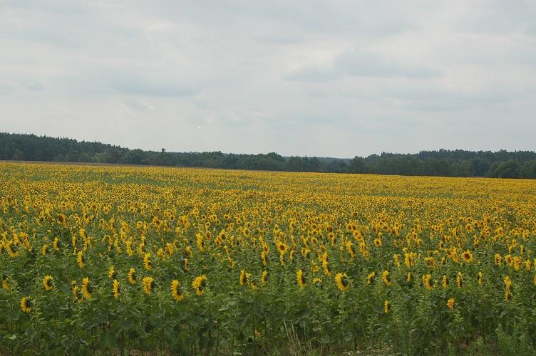 Foto: Landschaft im Fläming / Brandenburg.