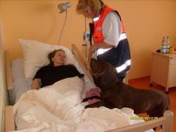SeniorInnen News & Infos @ Senioren-Page.de | Senioren-Page.de - nicht nur für Senioren & Seniorinnen. Foto: Die Hundetherapie ist auch mit bettlägerigen Senioren möglich.