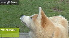Hunde Infos & Hunde News @ Hunde-Info-Portal.de | Hunde-Infos @ Hunde-Info-Portal.de. Foto: GASSI-TV bietet Tierhaltern und solche, die es werden wollen Informationen rund um das Tier. Von Tierschutz über Gesundheit bis zur Freizeitgestaltung reicht die Berichterstattung der Magazine. Doch GASSI-TV ist auch Internetfernsehen zum anfassen, denn die tierischen Gäste kommen aus den Reihen der Zuschauer.
