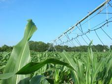 Landwirtschaft News & Agrarwirtschaft News @ Agrar-Center.de   Foto: Die vollautomatische Steuerungstechnik von Schudzich sorgt für perfekte Beregnung.