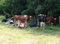 Landwirtschaft News & Agrarwirtschaft News @ Agrar-Center.de | Foto: Warum erkranken Kühe an chronischem Botulismus?