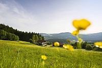 Orchideen-Seite.de - rund um die Orchidee ! | Foto: Bayerischer Wald Landschaftsbild.