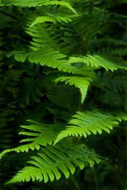 Freie Software, Freie Files @ Freier-Content.de | Foto: Pflanzenfotografie umfasst ein breites Spektrum. Es reicht von der reinen Dokumentation über das Spiel mit Licht, Farbe und Form bis hin zur Nahaufnahme.