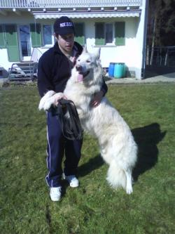 Hunde Infos & Hunde News @ Hunde-Info-Portal.de | Hunde-Infos @ Hunde-Info-Portal.de. Foto: Silvan Brun mit einem rehabilitierten Weissen Schweizer Schäfer.