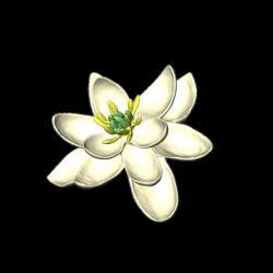Orchideen-Seite.de - rund um die Orchidee ! | Foto: Die Ur-Blüte war zweigeschlechtlich und hatte eine Blütenhülle von in Dreierkreisen angeordneten, kronblattähnlichen Organen. (Copyright: Hervé Sauquet/Jürg Schönenberger)