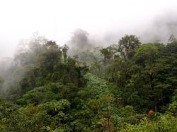 Landwirtschaft News & Agrarwirtschaft News @ Agrar-Center.de | Foto: Wald ist nicht gleich Wald. Grob lassen sich Waldflächen in Primär- und Sekundärwälder unterteilen.
