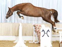 Landwirtschaft News & Agrarwirtschaft News @ Agrar-Center.de | Foto: Hannoveraner Verband e.V. - Der Verband ist ein Zusammenschluss von Züchtern zur Förderung der Pferdezucht und der Deutschen Reiterlichen Vereinigung (FN) angeschlossen.