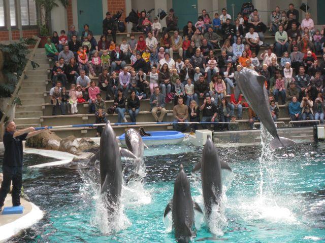 Tier Infos & Tier News @ Tier-News-247.de | Wal- und Delfinschutz-Forum (WDSF)